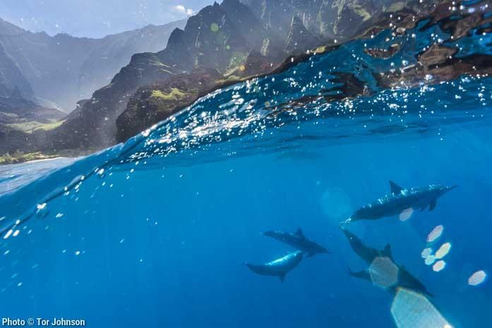 Dolphins on Kauai's Napali Coast